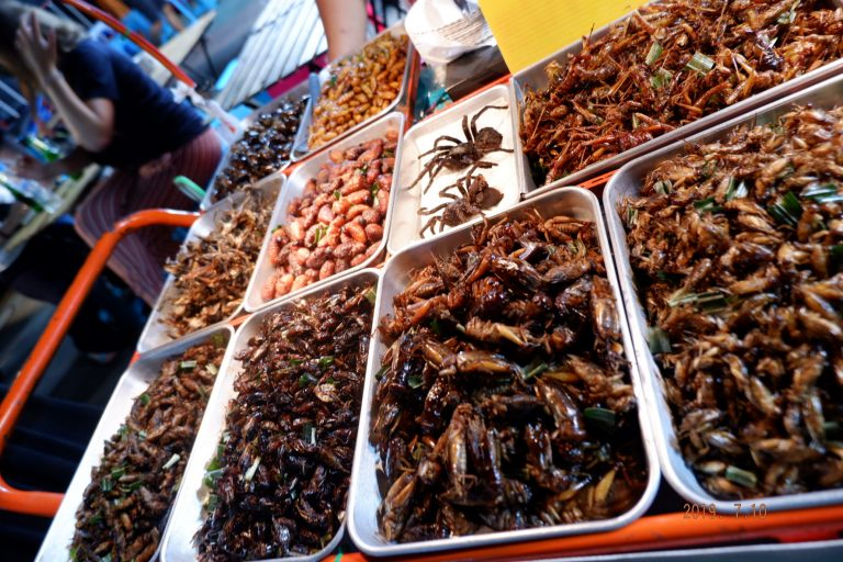 Thai insects