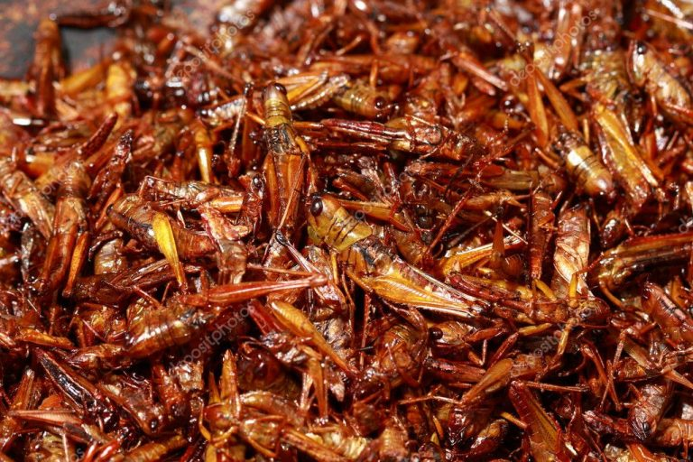 fried snack grasshoppers
